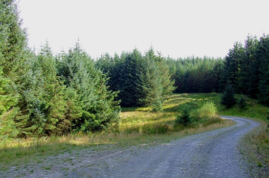 tywi_forest_road_ceredigion_-_geograph-org-uk_-_1510647